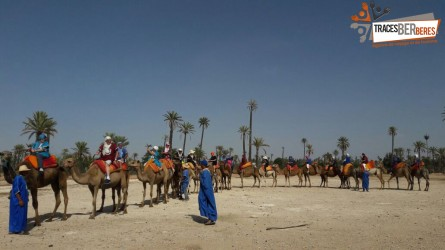 Camel Ride in Palmeraie