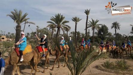 Kamele im Palmenhain