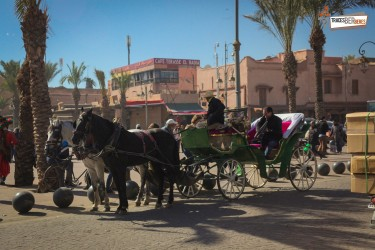 Carriage Ride Marrakech
