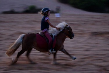 Horse riding in Palmeraie