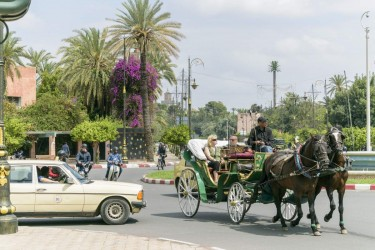 Promenade en Calèche à Marrakech